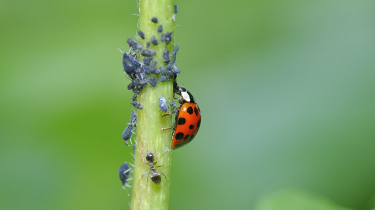 zien er niet alleen mooi uit, ze zijn ook ontzettend nuttig in je tuin ...