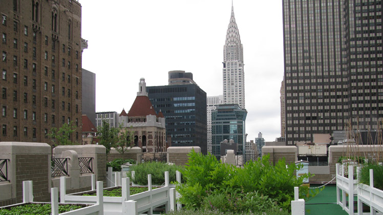 NEW-YORK-2015-489