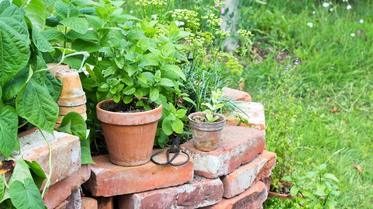 Weg wespen welkom zomer de tuin op tafel for Wat lemmet terras betekent